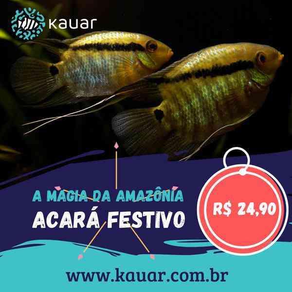 Os Peixes Mais Felizes e Saudáveis Para Seu Aquário Você Encontra Na Kauar!